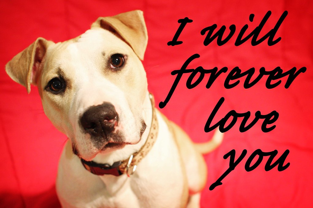 foreverloveyou