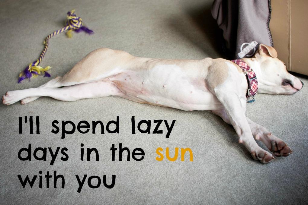 lazy02