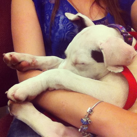puppies07