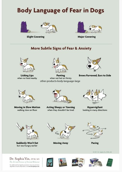 the cautious canine how to help dogs conquer their fears